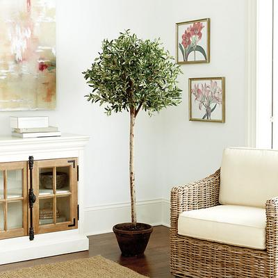Ballard Designs Potted Olive Tree