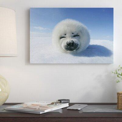 East Urban Home Baby Seal Photographic Print on Canvas ES...