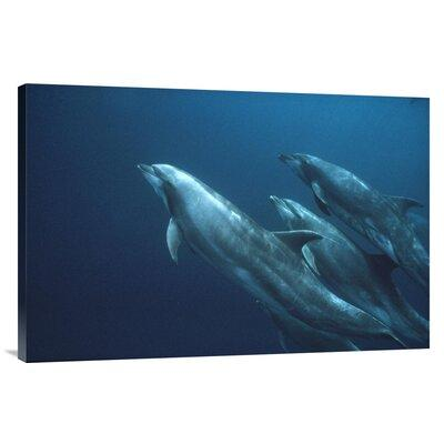 East Urban Home 'Bottlenose Dolphins Roca Redonda Galapag...