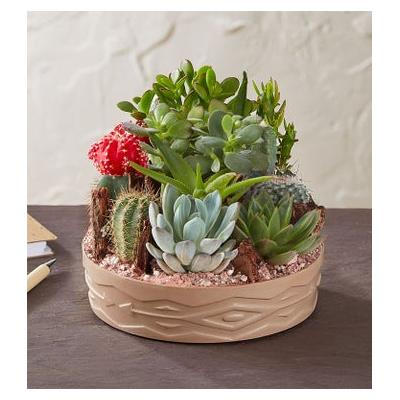 Cactus Dish Garden Large by 1-800 Flowers