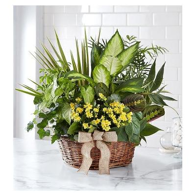 European Dish Garden for Sympathy Large by 1-800 Flowers